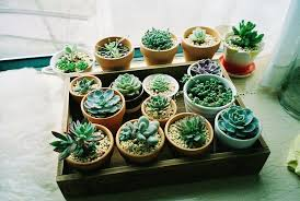plantes vertes d interieur plantes d intérieur décorez avec des plantes vertes