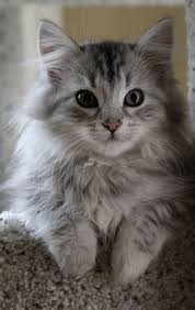 cat best 25 cats ideas on kitty cats kitty cats and