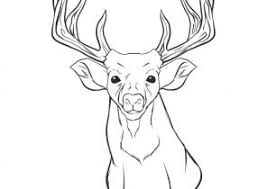 Deer Coloring Pages Coloring4Freecom