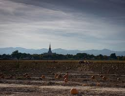 South Reno Pumpkin Patch by Utah Pick Your Own Pumpkin Patches Funtober