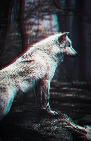 Wolf Wallpaper Pack by Prolite on DeviantArt
