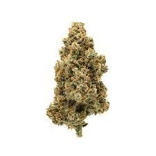 Grossista CBD Svizzera Ticino Vendita Ingrosso Fiori Cannabis Light