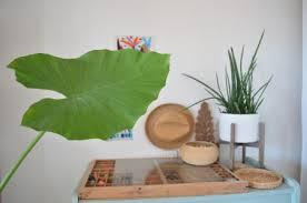 dormir avec une plante dans la chambre dormir avec des plantes dans la chambre danger