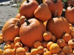 Piedmont Service Center Pumpkin Patch by 82 Best Get Fit Georgia Images On Pinterest