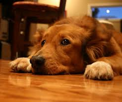 fixing doggie damaged floors how to remove scratches from