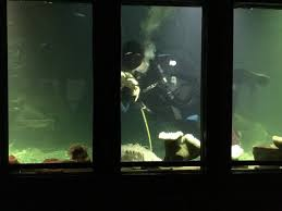 Oregon Undersea Gardens Newport All You Need to Know Before