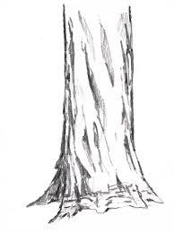 Good Drawing Pics Of A Tree Trunk Detail Description