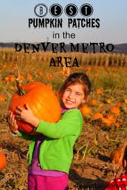 Denver Area Pumpkin Patches by Best Pumpkin Patches And Corn Mazes In The Denver Metro Area