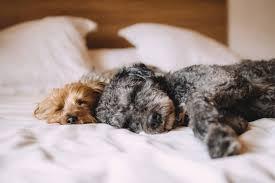 dürfen hunde im bett schlafen servus