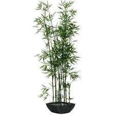 culture bambou en pot plante artificielle bambou achat vente plante artificielle