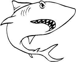 How Draw Great White Shark Step Fish Animals Free