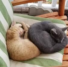 100 Wildcat Ridge Critters Home Facebook