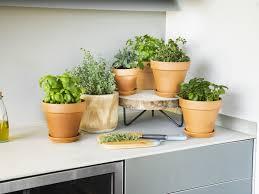 küchengarten im überblick baue kräuter und gemüse für