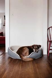 gute hundebetten für welpen 2021 hundefunde