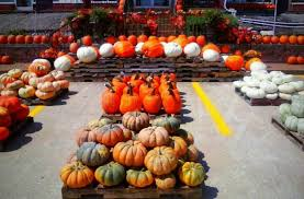 Maryland Pumpkin Patches Near Baltimore by The 7 Best Pumpkin Patches Near Nashville In 2016