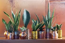 die top 5 luftreinigenden pflanzen pflanzenfreude