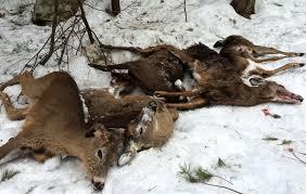 Deer Feeders 101