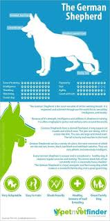 What Dog Sheds The Most by 25 Best Dog Breed Infographics Images On Pinterest Dogs For Sale