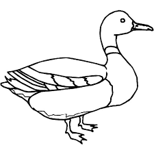 Mallard Duck Outline Coloring Pages