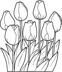 Tulips Is One Of Spring Flower Coloring Page Color Luna
