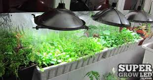 growing chilies with led grow lights grow led