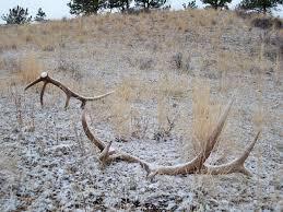 Shed Hunting Utah 2017 by 15 Shed Hunting Utah 2017 Emergency Shed Hunting Closures