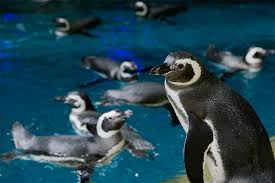 Jazzin At The Shedd Parking by Shedd Aquarium Discount Admission Tickets Chicago Citypass