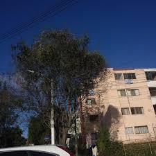 Chancha Vía Circuito Se Presenta En Mendoza VA CON FIRMA