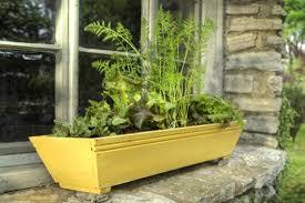 faire pousser un potager dans un pot pour fenètre ou balcon le
