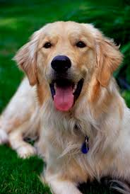 in what months do dogs shed the most dog care the daily puppy