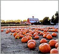 Pumpkin Patch In Homer Glen Illinois by Best 25 Pumpkin Farms Near Me Ideas On Pinterest Pumpkins
