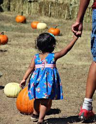 Pumpkin Patch Denver by Pumpkin Harvest Festival Kids Out And About Denver