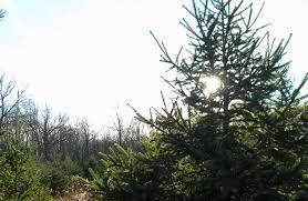 Christmas Tree Shop Middletown Ny by Stone Oak Tree Farm And B U0026b