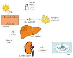 vitamin d deficiency in chronic liver disease