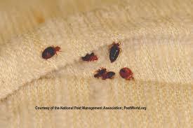 Bed Bug Johnson Pest Control Pest Control & Termite