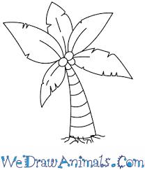 palm tree thumb