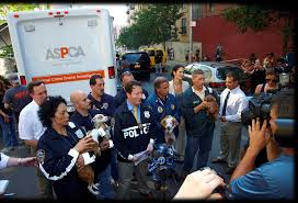 Deploying With FIR 10 Best Places To Adopt A Dog Or Cat In Nyc Aspca Stock Photos Images Alamy Events Pinups For Pitbulls Animal Care Centers On Twitter Meet Adorable Dogs Cats The Worlds Of Aspca And Puppy Flickr Hive Mind Vintage Adorable Animals From Aspcas Historical Archive This Gowanus Aspca Building Sheltered The Brooklyn Bring Texas Animal Shelter Other Happy Tails A Second Chance Chandler Pictures Jestpiccom