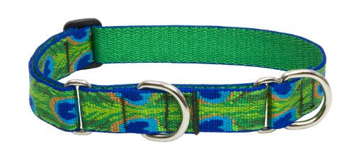 Lupine Martingale Combo Dog Collar - Tail Feathers, 15-22""