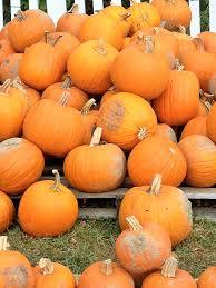 Pumpkin Patches Cincinnati Ohio Area by Parky U0027s Farm Pumpkin Patch
