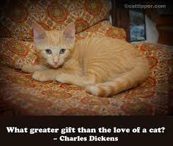 cat quotes cat quotes cattipper