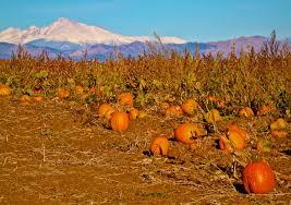 Boulder Pumpkin Patch 2015 by Photography