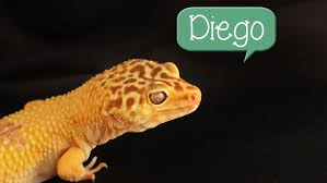 2 Other Names For Halloween by 60 Possible Names For Your Pet Lizard Youtube