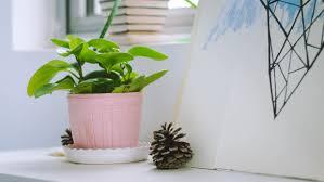 plante de bureau images gratuites plante vert bureau intérieur éclairage