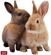 1art1 hasen zwei süße kaninchen wand deko