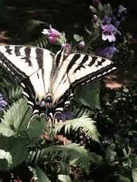 go the best pacific northwest plants that help pollinators