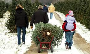 Fraser Fir Christmas Trees Delivered by Home Delivered Christmas Trees Five Star Christmas Tree Co Groupon