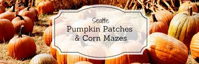 Seattle Pumpkin Patch by Pumpkin Patches And Corn Mazes Seattle Wa