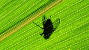 fliegen plage in der wohnung deswegen ärgern uns insekten