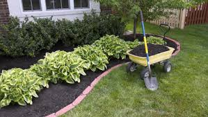 What Every Gardener Should Know About Mulching