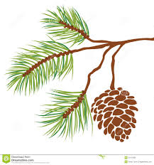 Pine Cone Christmas Tree Lights by Pine Tree Branch And Cone Vector Royalty Free Stock Images Image
